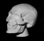 Череп анатомический на подставке